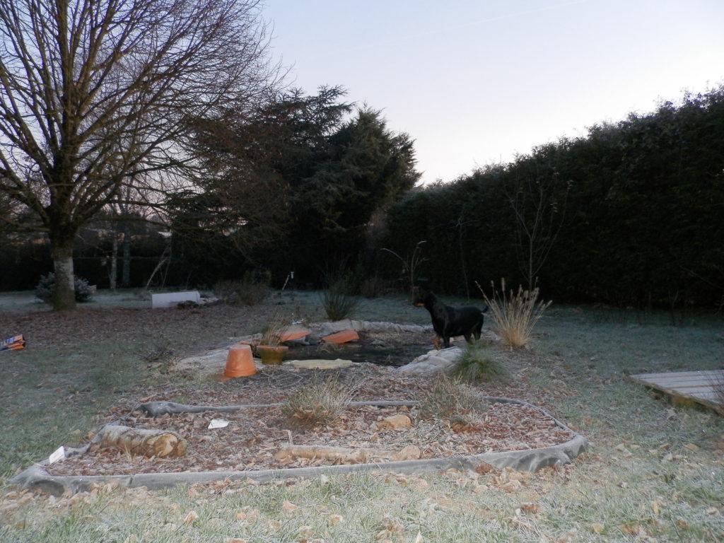 Coin du jardin avec au premier plan une mini-tourbière artificielle, puis une mare à filtration naturelle (surface bien gelée), des fruitiers sur le côté (pommiers, groseilliers) et des arbres de haut jet au fond (tilleul, cèdre). Au niveau de la mare, Dolly, chienne croisée Dobermann en train de casser la glace de la surface de l'eau.