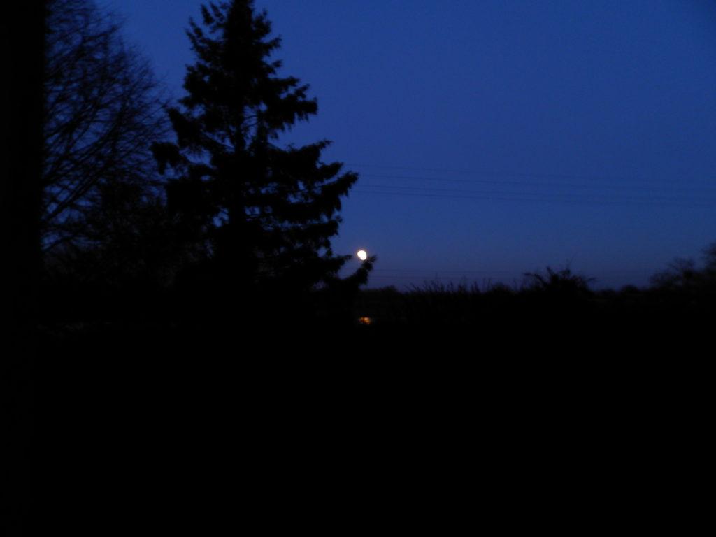 Photo de la Lune prise le matin du 21 janvier 2019, jour de l'éclipse. Il fait encore nuit, on y voit les ombres et squelettes des arbres: à gauche un tilleul, au fond un sapin et entre les branches de celui-ci le point très lumineux de la Lune