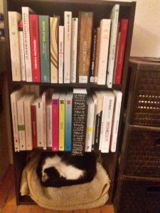 un de mes chats dormant en bas de l'étagère contenant des livres à lire